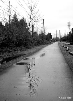 Photo of the Day by A. F. Litt: January 1, 2012, Springwater Trail