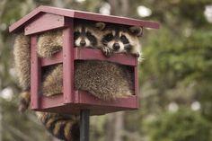 Эти милые и смешные животные!