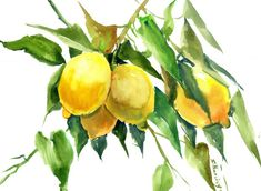 Buy Lemon Tree, Watercolor by Suren Nersisyan on Artfinder. Discover thousands of other original paintings, prints, sculptures and photography from independent artists. Watercolor Flowers, Original Paintings, Sculptures, Lemon, The Originals, Artist, Prints, Artists, Flower Watercolor