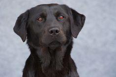 Schnupperpaket - der ideale Test für Ihren Hund   bestehend aus:  1 x Hundewurst Schnupperpaket 6 x 400g 1 x Trockennahrung Adult Maxi 400g 1 x Trainingshappen mit Seefisch 700g 1 x Knabberpansen 150g.   Ihr Rabatt: ca. 5,,0 %