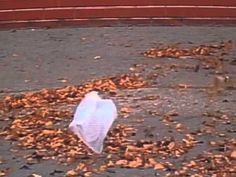 American Beauty Film / The Plastic Bag Scene. The writer of the film Alan Ball was sitting at the World Trade Center plaza when he saw a plastic bag floating in the wind and was inspired by it to write the film. So much beauty in the world… American Beauty Soundtrack, Movies Showing, Movies And Tv Shows, Sam Mendes, Film Serie, Just Dance, Film Stills, Great Movies, Movie Quotes