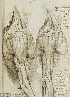 Detailed: Da Vinci's sketches of muscles and skeletons foreshadow modern techniques, such as MRI scans and computer modelling, to 'an astonishing degree' Medical Drawings, Medical Art, 3d Drawings, Drawing Sketches, Medical Humor, Arm Anatomy, Anatomy Art, Anatomy Drawing, Skull Anatomy