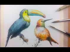 How to Draw & Paint Birds with Ink and Watercolor Part 1 - YouTube