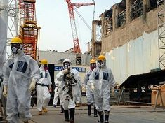 A study suggests that the Fukushima nuclear disaster may have indeed significantly affected animals and wildlife in the region due to radiation exposure. The nuclear power plant was hit by an earthquake in Fukushima, Reactor, Earthquake And Tsunami, Japan Earthquake, Nuclear Disasters, Nuclear Power, Nuclear Energy, Solar, Japanese