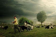 the farmer by budi 'ccline' on 500px