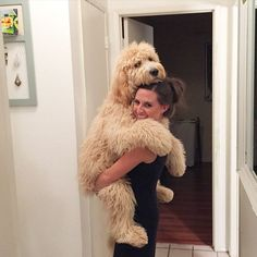 Rockwell -almost 8 months; #goldendoodle #puppy #cute #fluffy - Tap the pin for the most adorable pawtastic fur baby apparel! You'll love the dog clothes and cat clothes! <3