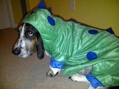 Dinosaur or Basset Hound?