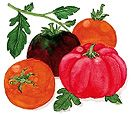 Tomato, Heirloom, Summer Feast
