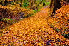 Fall by Gopu raj on 500px   #Autumn