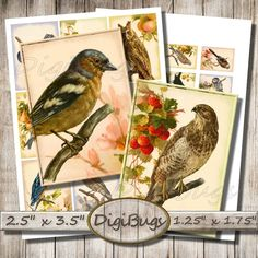 Vintage Bird Images, Digital Collage Sheet, 2.5 x 3.5 inch Aceo Cards, 1.25 x 1.75 inch Labels, Gift Tags, Bird Decoupage Paper Download, a1 Bird Illustration, Decoupage Paper, Vintage Birds, Collage Sheet, Digital Collage, Gift Tags, Vintage World Maps, Unique Jewelry, Handmade Gifts