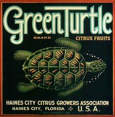 Green Turtle :: Florida Southern College Fruit and Vegetable Crate Label Collection Vintage Labels, Vintage Signs, Vintage Ads, Vintage Images, Vintage Posters, Vintage Prints, Vintage Florida, Old Florida, State Of Florida