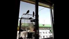 Видео - GoogleФото