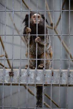 Monkey #Nikon D3100