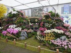 Alternative Eden Exotic Garden: Chelsea 2013