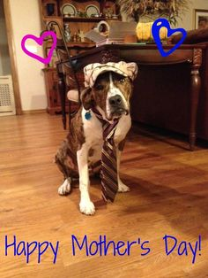 Happy Mothers Day From Dogs N Pawz!