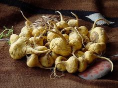 Maca is a medicinal plant from Peru know for being an excellent aphrodisiac & for its help with with nervous system in combating problems caused by stress, combating several diseases & restoring vitality.