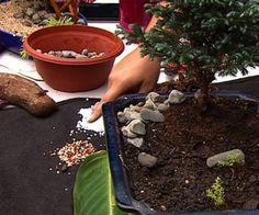 Mini jardines para espacios pequeños