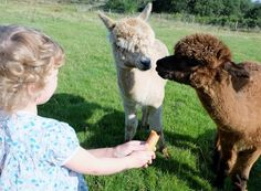 One of the joys of keeping our animals is taking the kids out to feed them and collect the eggs everyday. Tumblr