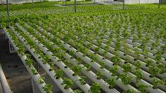 Seized marijuana equipment used for indoor urban garden