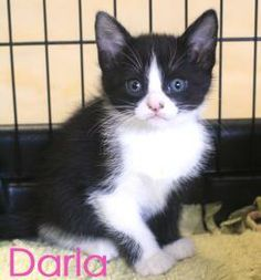 Adopted- My siblings and I were born to a pregnant stray. Fortunately, someone rescued her and cared for us after we were born. We were all taken to Cat Haven so we could find furever homes. I'm a friendly kitty who gets along well with other cats.