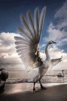 Paramahamsa - hindu for the supreme swan, a title of honour given to those who have reached spiritual enlightenment, somone who is equally at home in matter and spirit