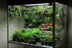 Orchids in Bloom: Rebuilt Orchidarium