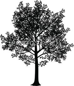red maple tree silhouette - Google Search