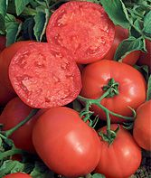 Top 10 Tomato Solutions from Burpee - fixes for tomato problems