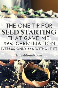 I planted some seeds with this free item and some without and I couldn t believe the difference in seed germination rates A whopping 96 vs 34 If you re starting seeds indoors you ve gotta try this gardeningtips startingseeds frugalthumb Diy Mini Greenhouse, Seed Starter Kit, Starting Seeds Indoors, Plant Seeds Indoors, Germinating Seeds Indoors, Starting Flowers From Seeds, Herbs Indoors, Seed Germination, Growing Seeds