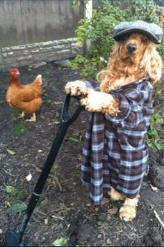 how cute is this gardener ? Just another day at the office! :)