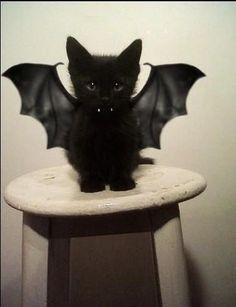 I want one!! :DDD