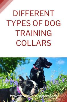 Broadly speaking, there are three types of e-collars for dogs: bark training collars, boundary training collars, and remote training collars. All three kinds can be split into two groups of stimulus: the shocking kind and the non-shocking kind. #dogtraining #trainingcollars Citronella Bark Collar, Bark Collars For Dogs, Best Dog Training, Training Tips, Anti Bark Collar, Different Types Of Dogs, Dog Shock Collar, Buy A Dog, Aggressive Dog