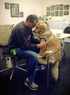 Wcc's Sandy having a bonding moment with her war veteran trainer at Warrior Canine Connection - West Coast Programs