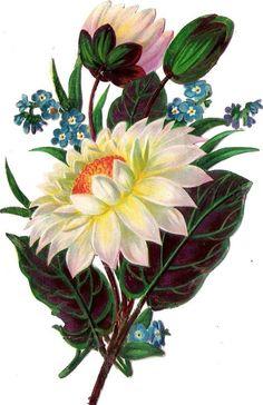 Oblaten Glanzbild scrap die cut  chromo  Blume flower 13,5 cm  fleur