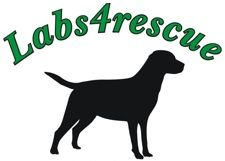 Labs4Rescue <3   Where my boy came from, best dog EVER!!