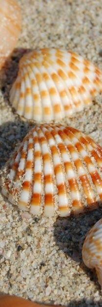 Seashells On the Beach | Seashells and Rocks on the Beach