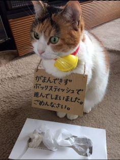 がまんできなくてごめんにゃさい……! 叱られた猫ちゃんの反省する姿がかわいい