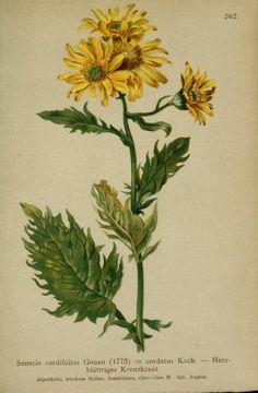 3 - 1882 - Atlas der Alpenflora / herausgegeben vom Deutschen und Oesterreichischen Alpenverein ; by  Anton Hartinger