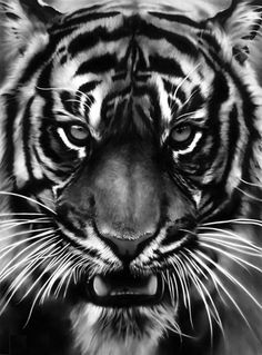 charcoal art. amazing! Great way to depict texture
