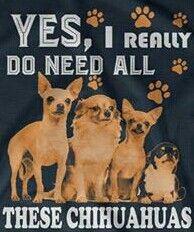 Chihuahua                                                                                                                                                                                 More