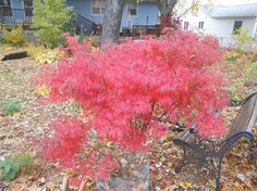 Fall Color in My Garden
