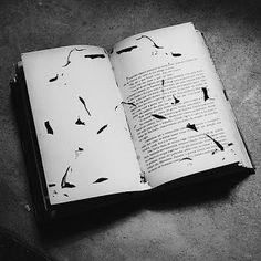 O conhecimento muda a perspectiva: Peguei um livro já lido na estante e reparei que as traças haviam feito um grande estrago. Havia um caminho nas folhas amareladas, carregadas de história, sensibilidade, dores, medos e anseios dos personagens.