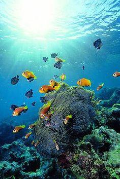 A víz alatti élet ezer színben pompázik Sharm el-Sheikh partjainál Scuba Destinations, Marine Fish Tanks, Ocean Aquarium, Sharm El Sheikh, Coral Reefs, Red Sea, Ocean Life, Seashells, Ancient Egypt