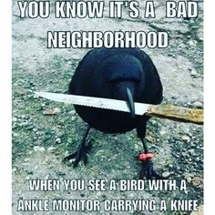 If You Have A Companion Bird, You Will Love These Memes!: This Guy Means Business! We've chosen the best bird memes and compiled them all in one spot. We hope you enjoy the humor and cleverness of these selections. All Meme, Stupid Funny Memes, Funny Relatable Memes, Haha Funny, Funny Cute, Funny Shit, Super Funny, Funny Stuff, Scary Funny