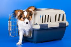 5 Tips For Helping Your Pet Adhere To Cage Rest After An Injury