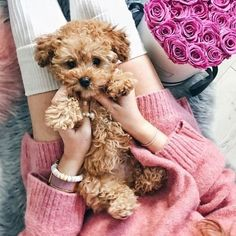 @ c i t y c h i l d en We Heart It – ⓟⓤⓟⓟⓘⓔⓢ – New Epoxy Rottweiler Puppies, Dachshund Puppies, Cute Puppies, Cute Dogs, I Love Dogs, Puppy Love, Beaded Dog Collar, Cool Dog Houses, Diy Dog Bed