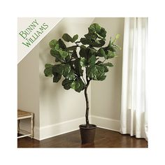 Ballard Designs Bunny Williams Faux Fiddle Leaf Fig Tree ($399) via Polyvore featuring home, home decor, floral decor, handmade home decor, faux fiddle leaf fig tree, artificial trees, fake fiddle leaf fig tree and artificial tree trunk