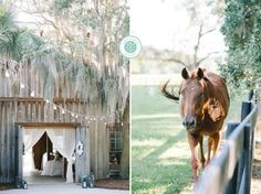 WESTON + JACLYN'S Southern, classic and elegant BOONE HALL PLANTATION wedding and Cotton Dock reception photos // cafe lighting, draping and horses by Charleston wedding photographers Aaron and Jillian Photography