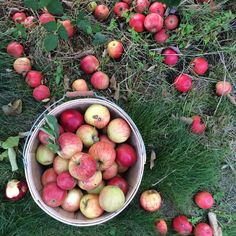 Floret Flowers: Apples