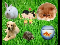 ▶ We love Pets - Song - YouTube -Repinned by Totetude.com